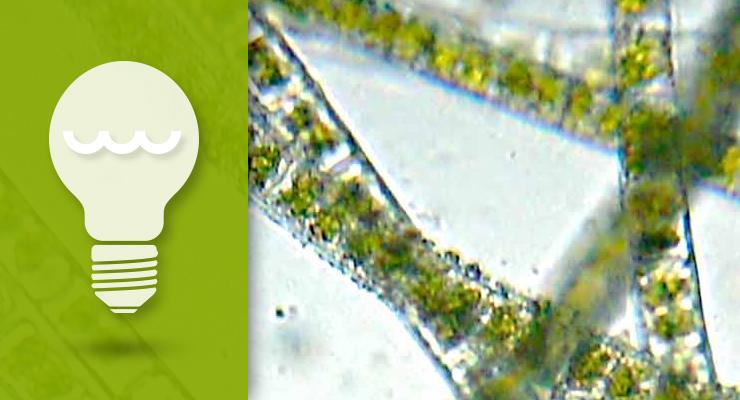 Three Inexpensive Algae Prevention Stepsthumbnail image.