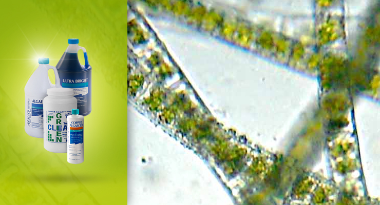 Algae Removal and Preventionthumbnail image.