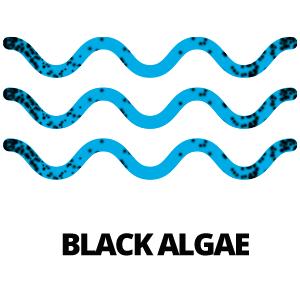 Black Algae