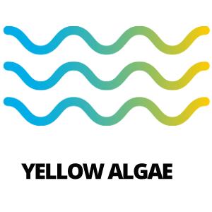 Yellow Algae