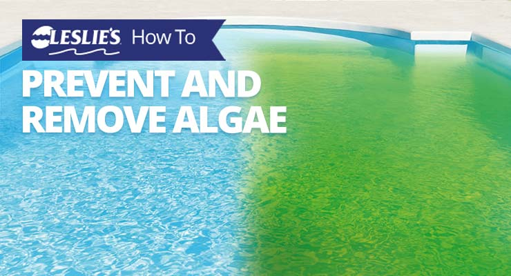 How To Prevent and Remove Algaethumbnail image.