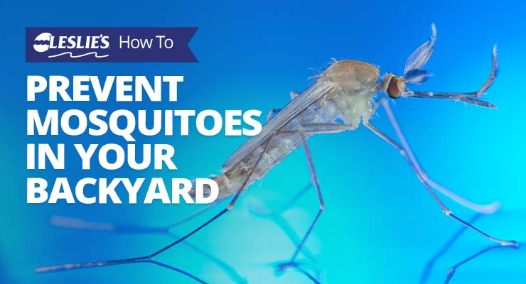 How To Prevent Mosquitoes in Your Backyardthumbnail image.